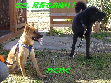 aniki5