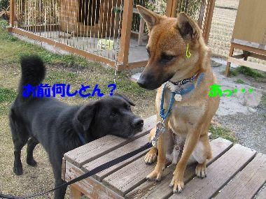 anikidai5