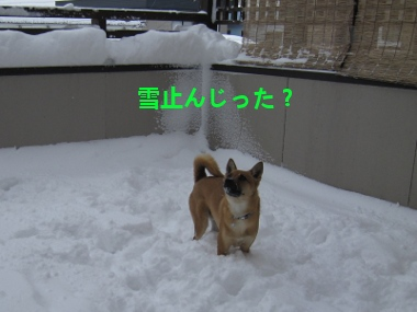 雪止んじった