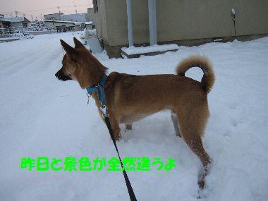 kesanoyuki