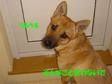 tobira2