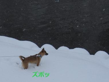 雪の川沿い