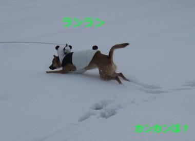 雪中パンダ2