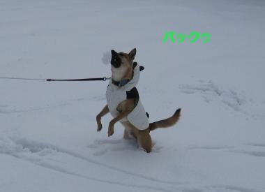 雪中パンダ3