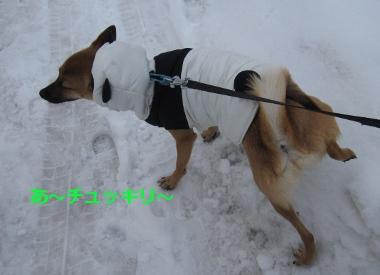 雪中パンダ4