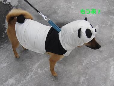 雪中パンダ9