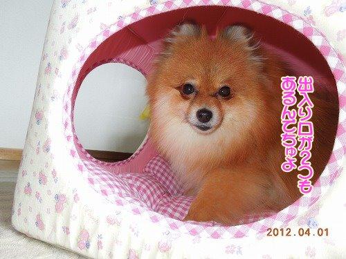 201200401_04.jpg