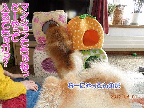 201200401_05.jpg