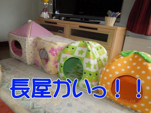 201200401_06.jpg