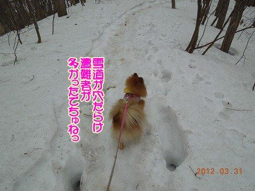 20120331_03.jpg