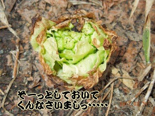 20120331_04.jpg