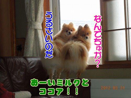 20120331_06.jpg