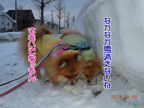 20120407_01.jpg