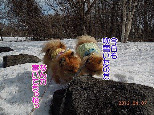 20120407_04.jpg