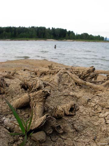 湖畔の切り株の跡