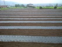 14日のにわか雨の後の畑