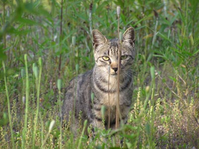hardboiled cat3