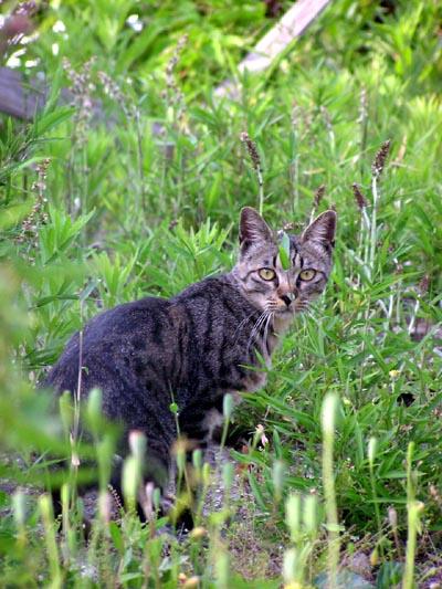 hardboiled cat4