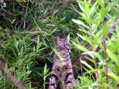 hardboiled cat6