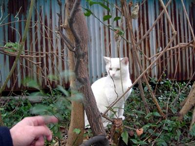 空き家の白猫