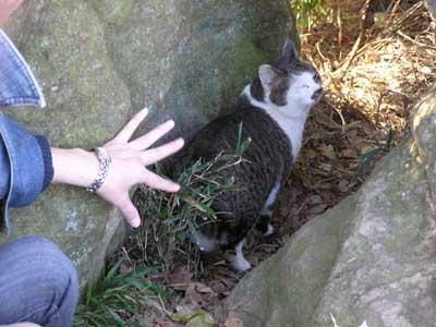 cheshire cat b-2