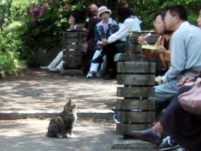 三渓園のお坐り猫