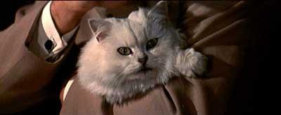 brofeld's cat 2