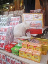 海苔屋の看板猫