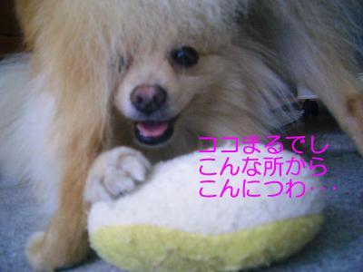 2008年07月18日_CIMG3474