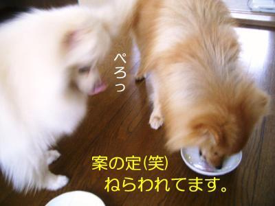 2008年08月19日_CIMG3917