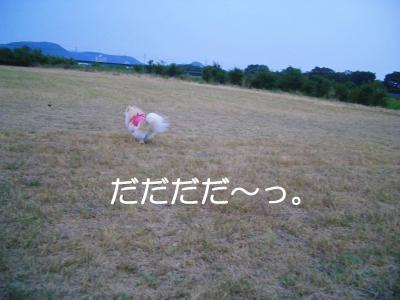 2008蟷エ08譛・2譌・_CIMG3982_convert_20080822190622