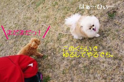 20110420DSC01329.jpg