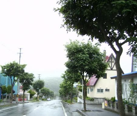 桂岡 上の方 エンジュ街路樹
