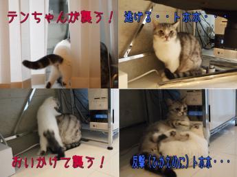 クルーくんVSテンちゃん
