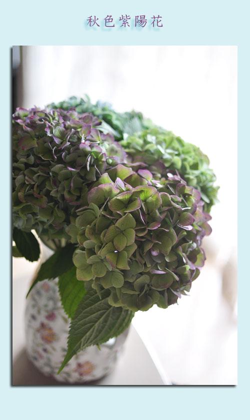 10月1日秋色紫陽花1