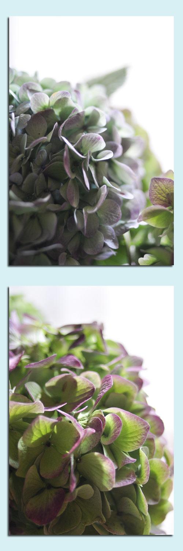 10月1日秋色紫陽花2