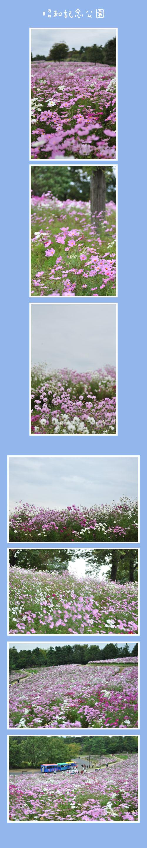 10月22日昭和記念公園1