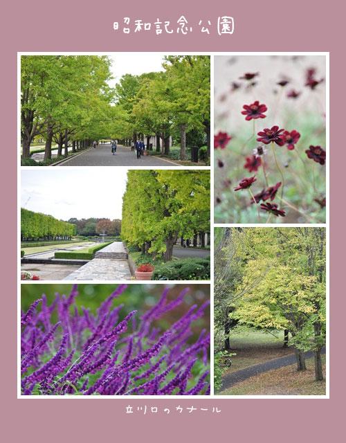 10月23日昭和記念公園2