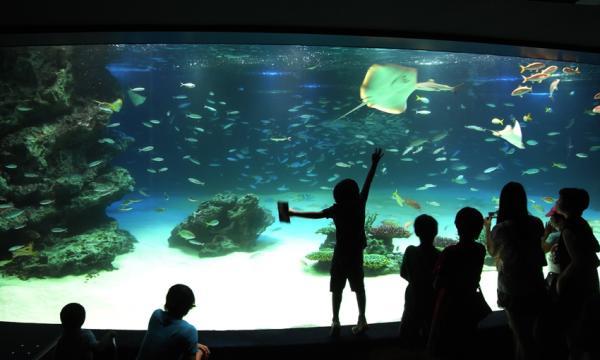 サンシャイン水族館1_convert_20110826200956