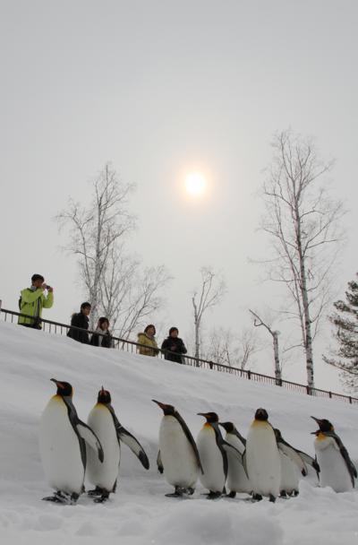 キングペンギン行進3_convert_20120228230151