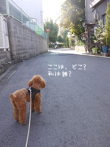 conv0021_20081113105559.jpg