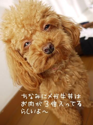 conv0038_20081113105023.jpg