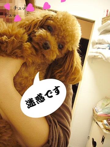 conv0085_20081017100942.jpg