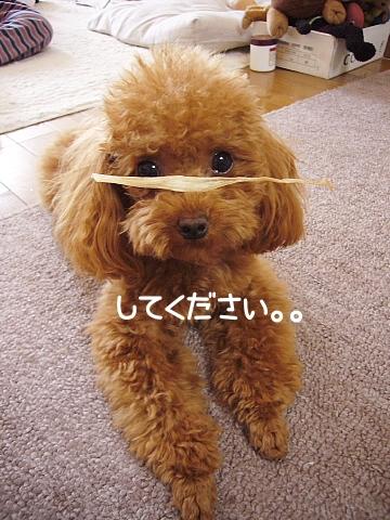 conv0127_20081101200926.jpg