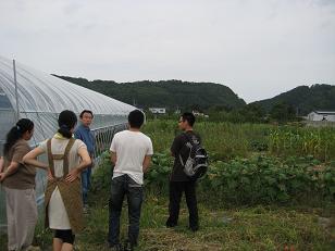 ヤーコン畑にて