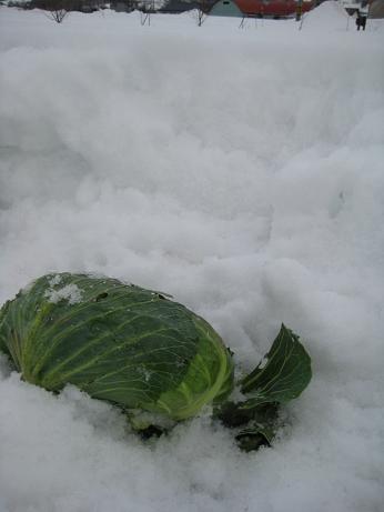 雪の深さは30センチくらい