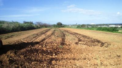 牧草畑のトラクター3