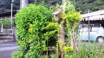 庭の鳥小屋1