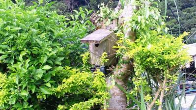庭の鳥小屋2
