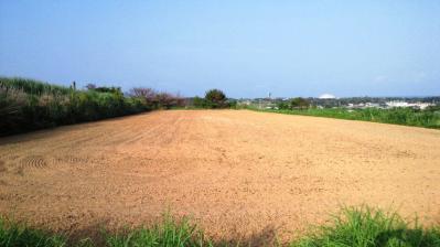 牧草畑の仕上1